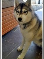 Louska (6 mois)