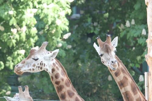 Entendu ou plutôt imaginé au zoo !