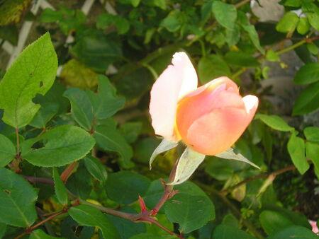 Fleurs_du_jardin_012