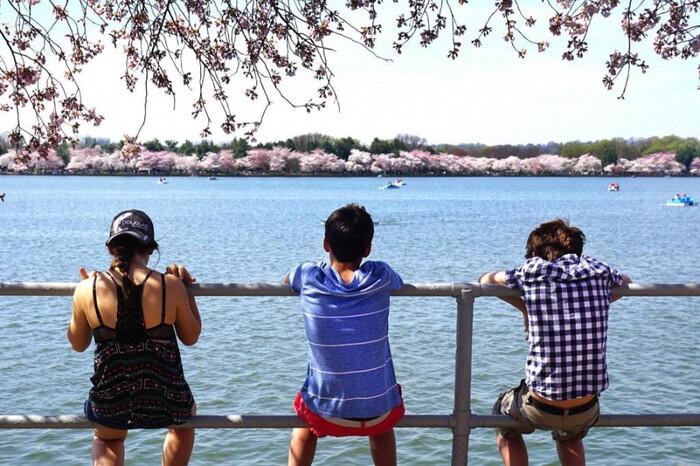 Photos-Villes du Monde 3:  Washington en fleurs