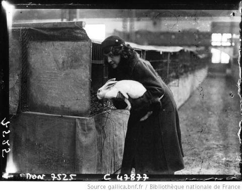 Des histoires de lapins en photos