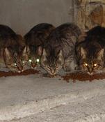 les yeux des chats...