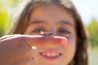 Bugs Programme des enfants du ministère