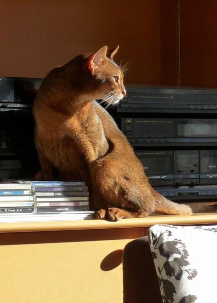 La symphonie des chats !!!!!