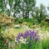 jardin-des-elfes-01.jpg