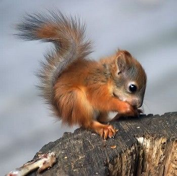 baby squirrel: