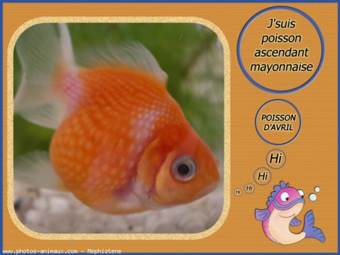 1er avril....Poisson d'avril