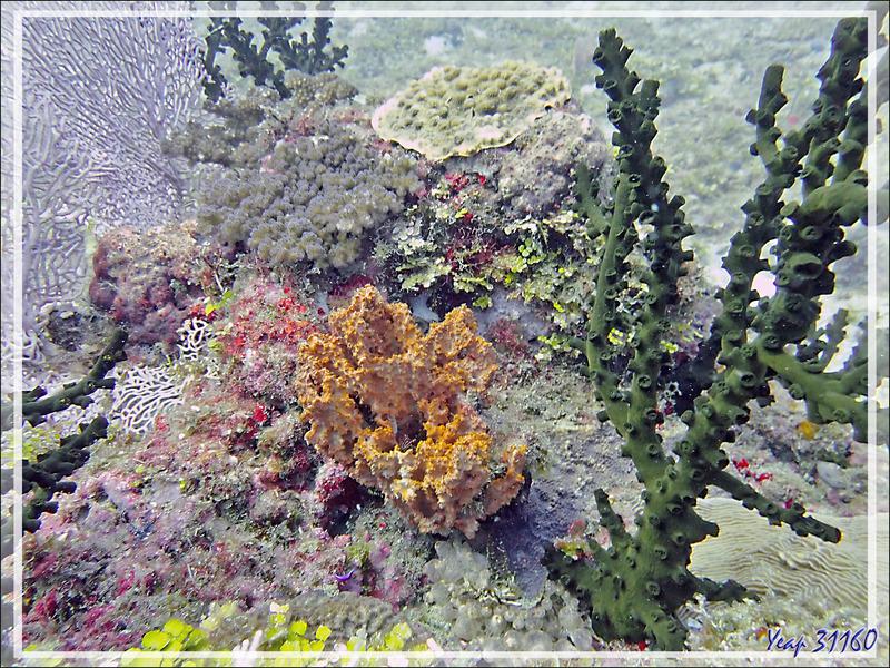 09/11/ 2019 : plongée sur le site Betaniazo (3ème Frère), - 26 mètres : il y avait du très beau monde autour de ce caillou ! - Tsarabanjina - Mitsio - Madagascar