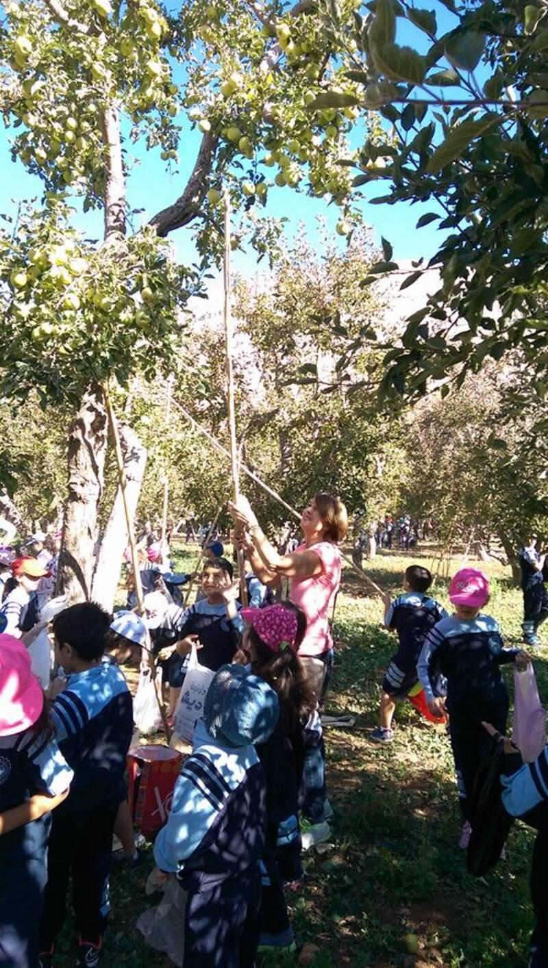 Promenons-nous dans les bois pour voir si les pommes sont là...