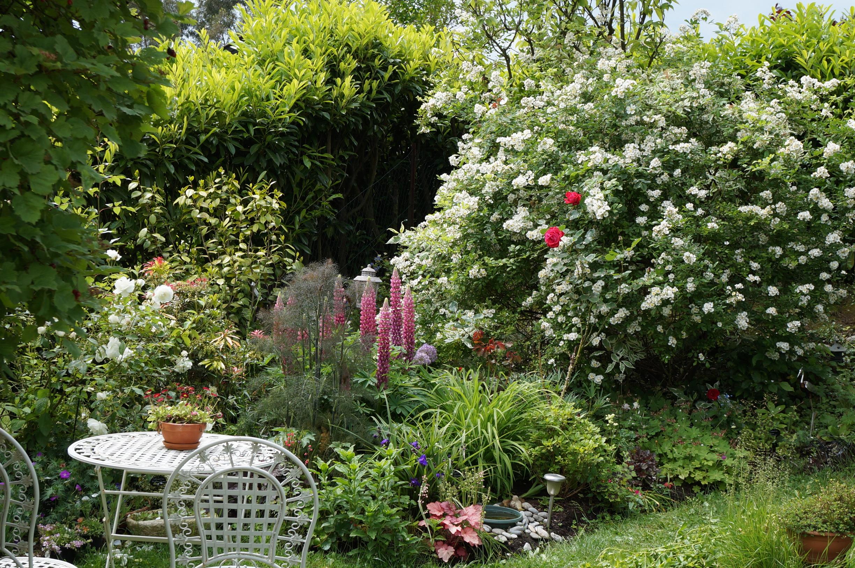 Un inconnu piquant le jardin de patou for Decoration jardin rosier
