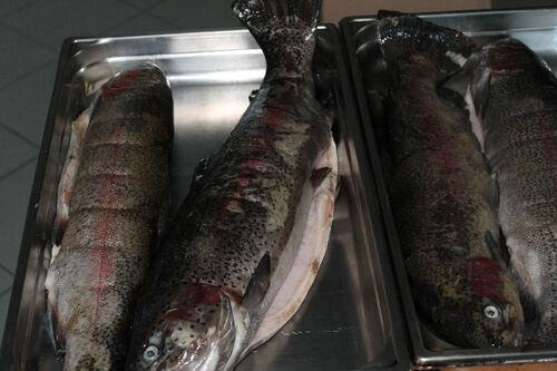 17 Avril 2014 journée  poisson