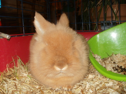 Notre lapin