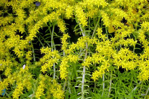 Des fleurs : du jaune et du rose