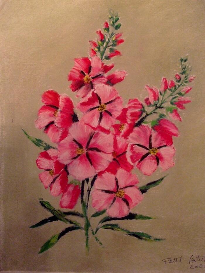 Roses trémière