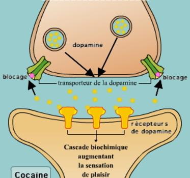 Addiction aux drogues dures : héroïne, morphine, cocaïne.