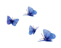 *** Butterflies in the air ***