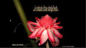 le-miracle-d-une-simple-fleur2.jpg