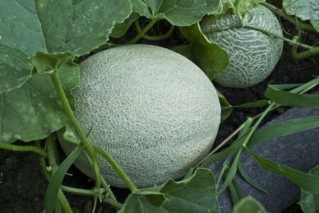 Fruits et légumes qui poussent d'une façon que vous n'imaginiez pas