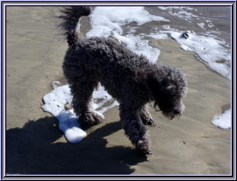 Titi Falcon à la plage