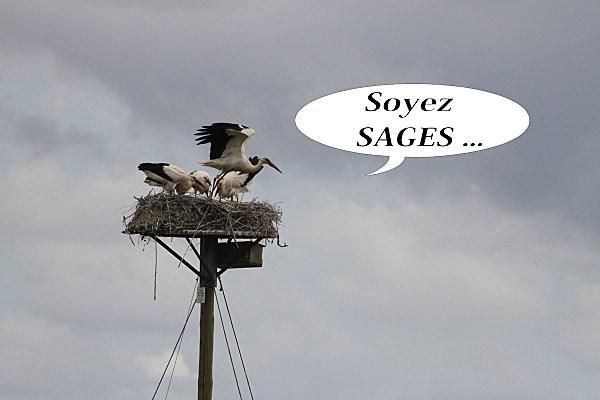 cigognes-25-