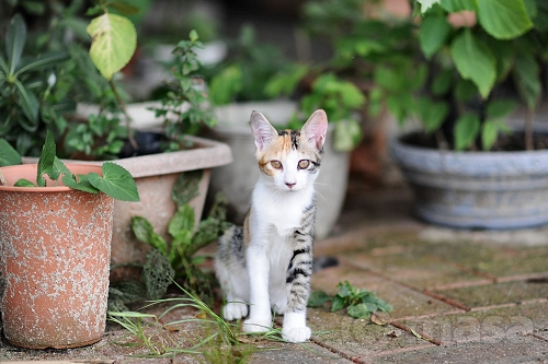 Les Chats de Fukuoka