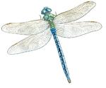 «Couleurs de libellules», Condé-sur-l'Escaut le 21 juin