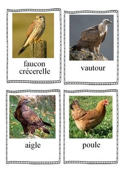 Imag'mots oiseaux