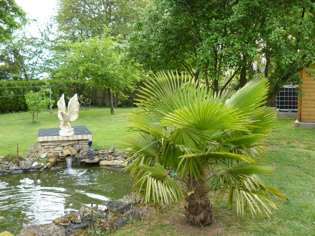 Palmier prés du plan d'eau
