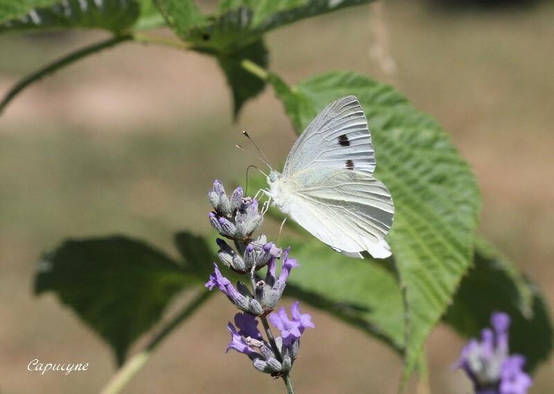 fleyrs-et-insectes 6751