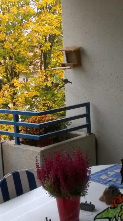 Oiseau sur mon balcon
