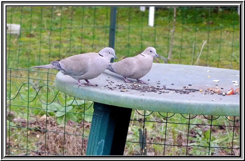 les visiteurs du jardin