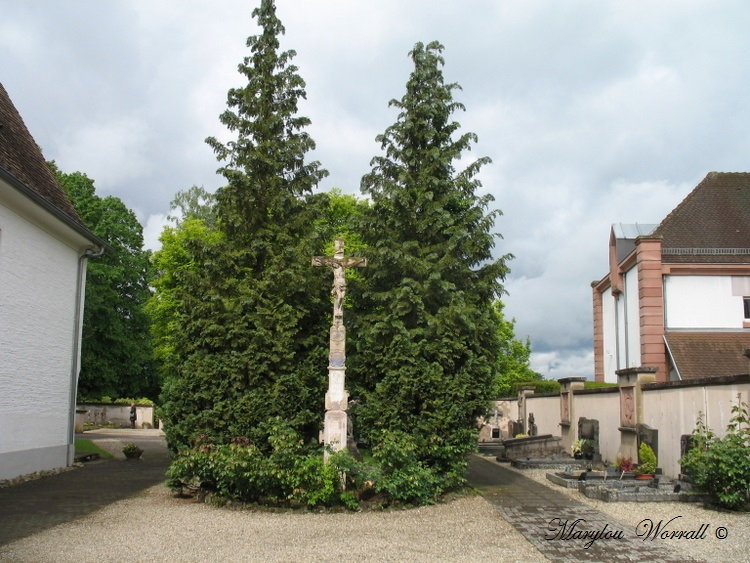 Neunkirch (67)