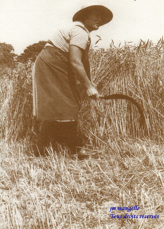 """Résultat de recherche d'images pour """"coupe le blé"""""""