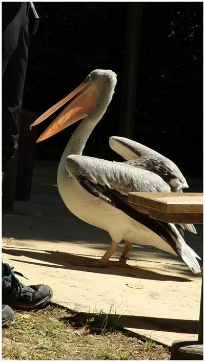 Le spectacle des oiseaux