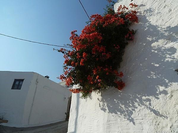 fleurs-rhodes-6.jpg