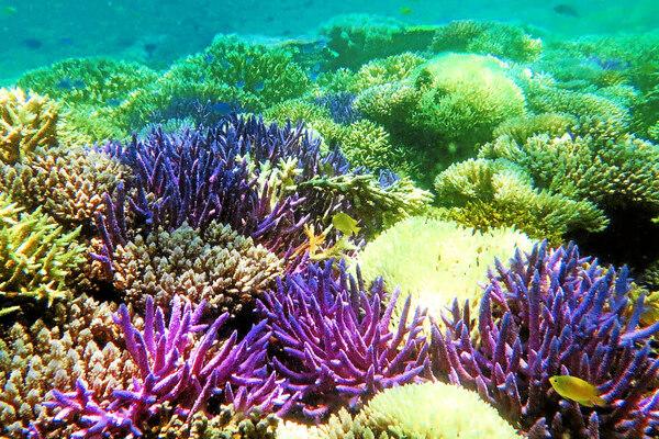 Hommage aux animaux de la mer * 2... Les coraux et Dauphins