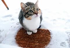 VOYOU et GRIGNETTE : neige, la grande découverte !