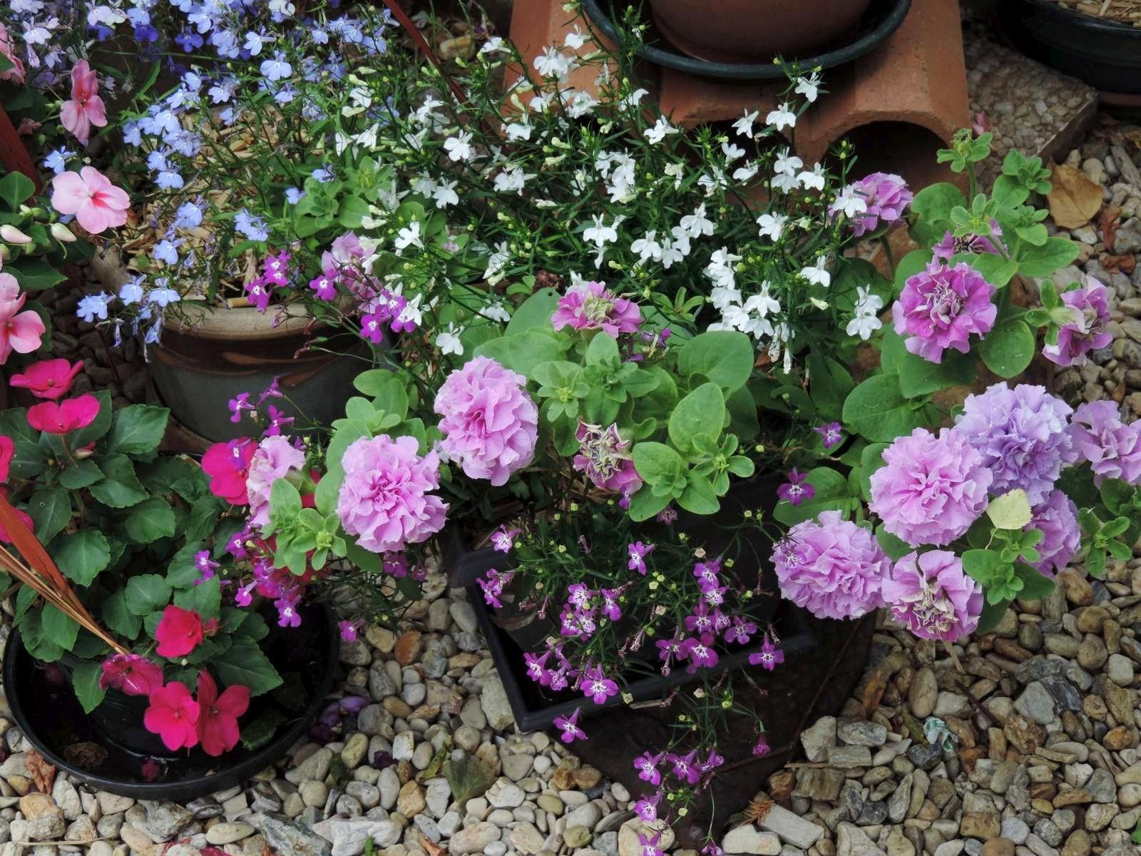 Mon jardin en pots...