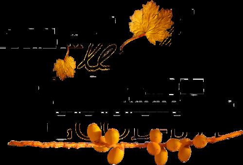 couleurs d'automne!
