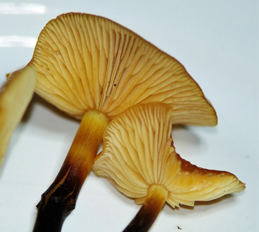 Toujours les champignons