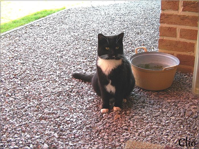 Pacha est parti ce matin pour le paradis des chats