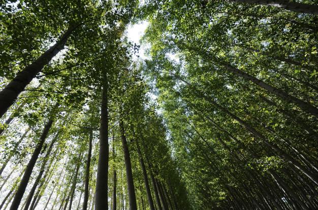 Forêt de peupliers à fuente vaqueros, grenade, andalousie, espagne Photo gratuit