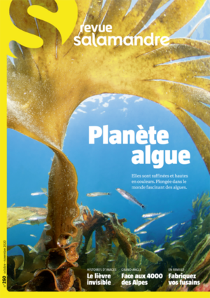 Planète algue