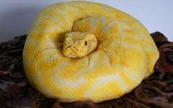 Gâteau Python