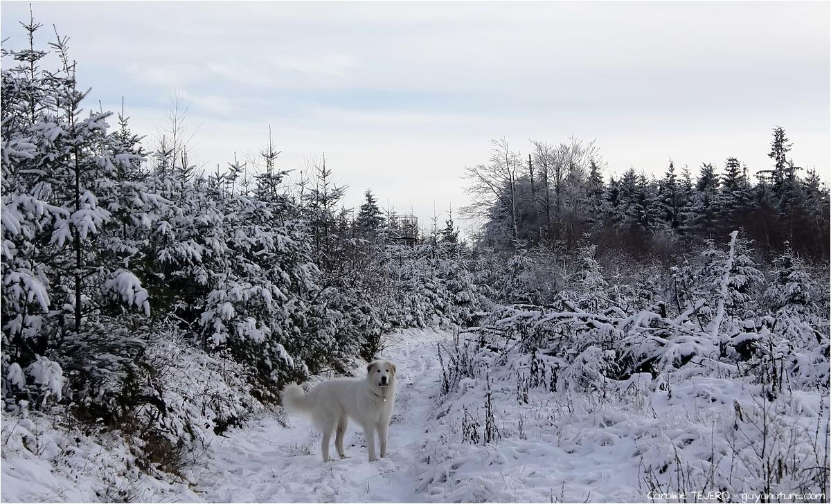 Loire: les monts de la Madeleine (3/3)