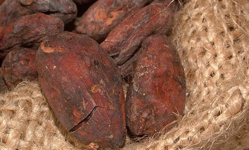 La fève de cacao en naturologie, santé, nutrition, coach