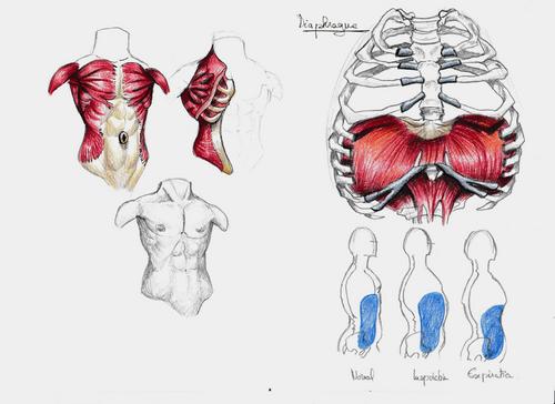 Pas mal d'anatomie ce soir!