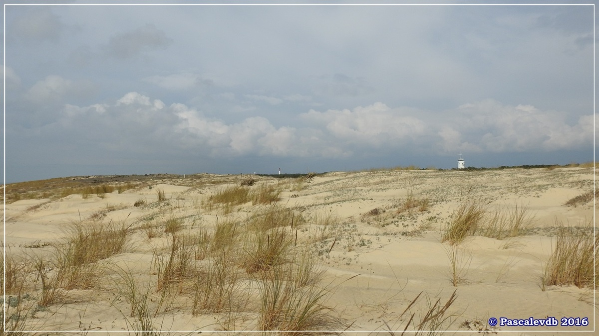 Dans les dunes à la pointe du Cap Ferret - Mars 2016 - 2/3