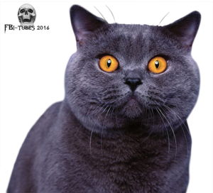 Tube Chartreux (2 tubes)