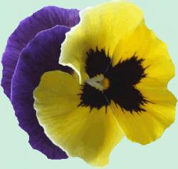 Tube fleur, tube pensée